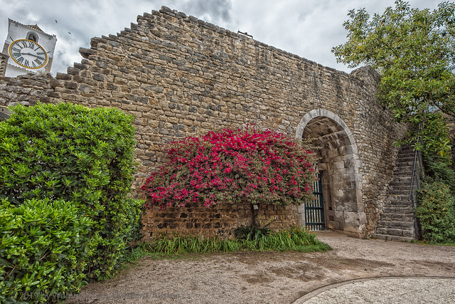Bell Tower and Red Bush on the Wall