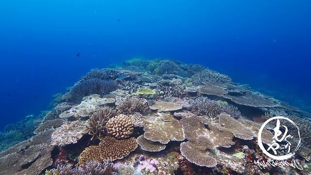 珊瑚好き。いろんな珊瑚が一カ所に♪癒されます♪