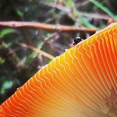 A Beatle and Mushroom