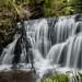 Lower Waipohatu Falls - Waipohatu Forest Walk - Catlins