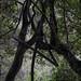 Waipohatu Forest Walk - Catlins