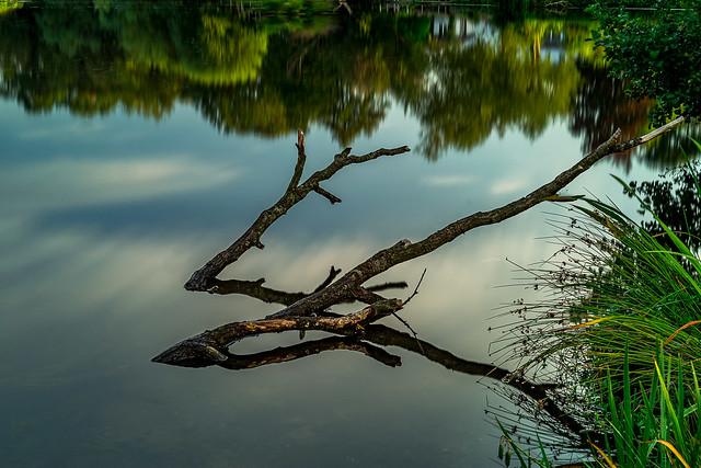 Reflections On Poynton Pool