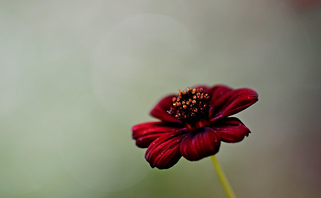 flower 1803