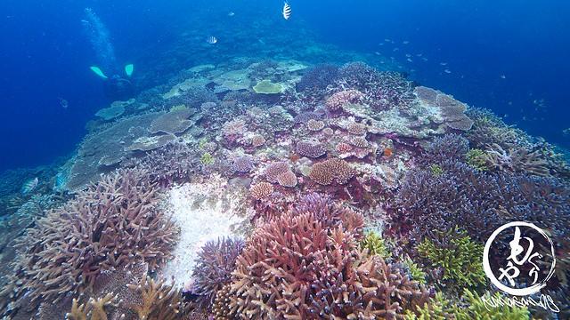 珊瑚さん、少しずつですが復活してくれてありがとう