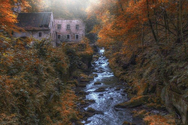 forgotten mill - the golden autumn
