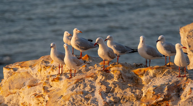 The gang's all here - Nightcliff Foreshore, Darwin Harbour, NT, Australia