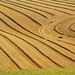 Field contours