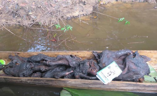 Meat left by poachers who fled | by teresehart
