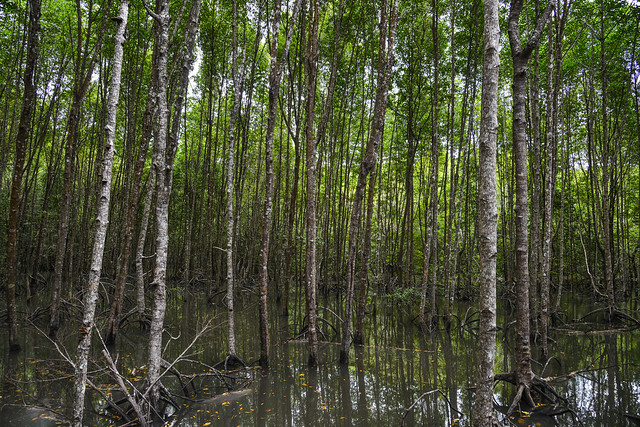 Mangrove jungle at summer day