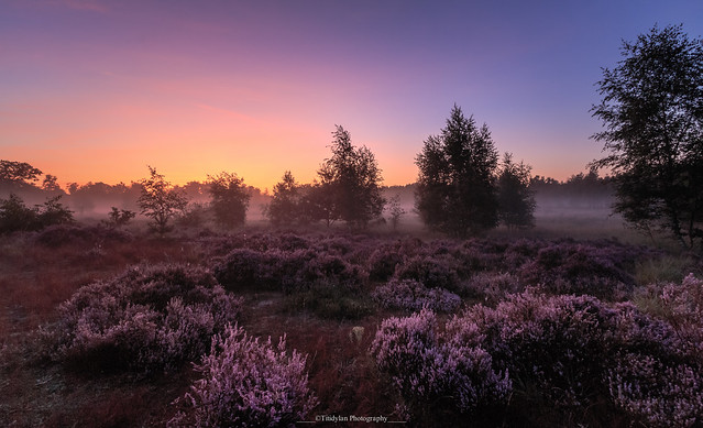 Sunrise over the heather