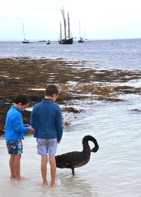 Black swan and blue juvenile humans