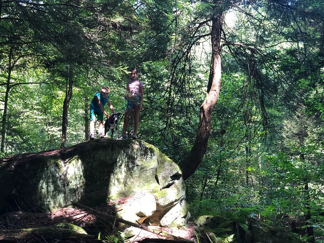 In the jungle, the mighty jungle… in this case Cuyahoga Valley National Park.