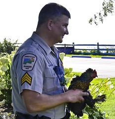 Ranger nabs chicken?