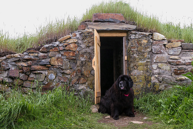 Tillie guarding the Root Cellar