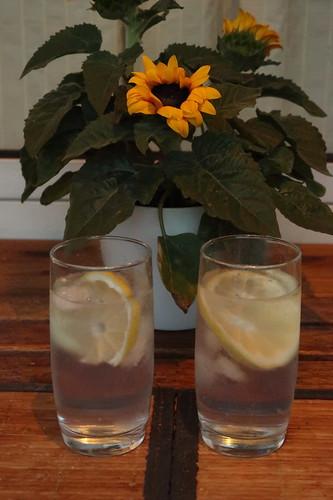 Gin Tonic (zum Ausklang des Tages auf unserem Balkon)