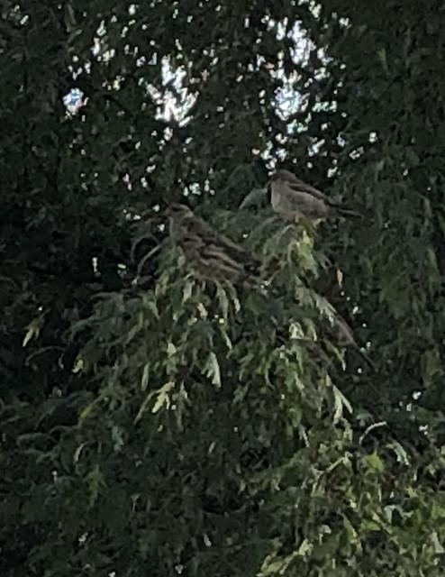 birds_8598