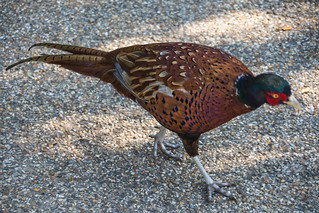We had a very pheasant afternoon