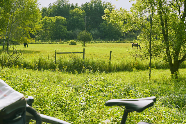 024399a  A Pastoral Scene Along The Fred Meijer Hartland Bike Trail