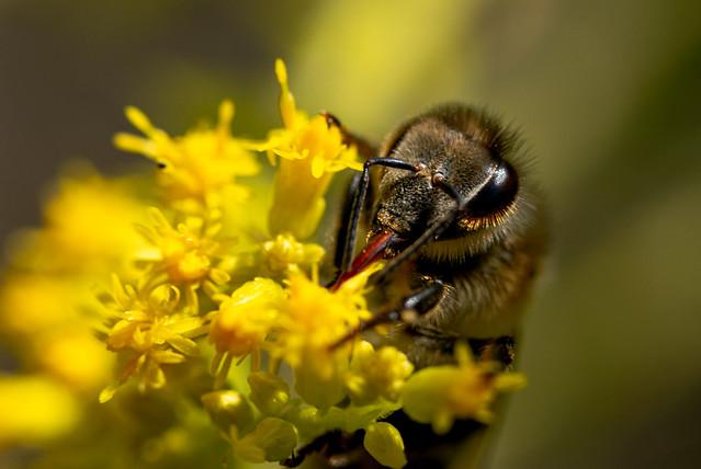 Nectar tastes delicious