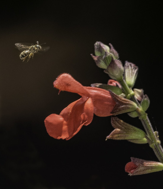 The Pink Flower And The Pollinator