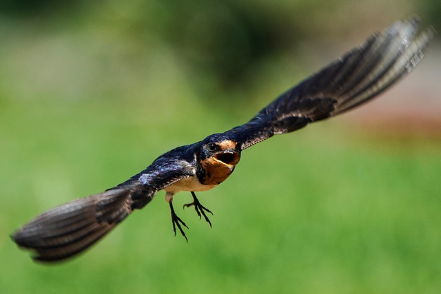 Flying & Chirping