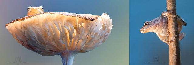 sitting pretty on a gilled mushroom