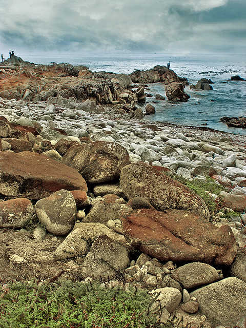 Along the 17-Mile Drive