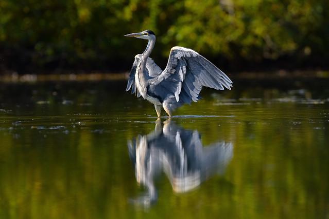 gentle landing