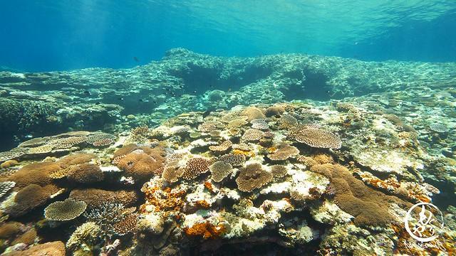 珊瑚さん復活してきたかな♪