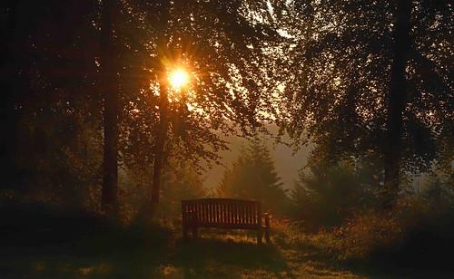 barrypotter edenmedia nikon d7200 dalbyforest sunrise nikkor
