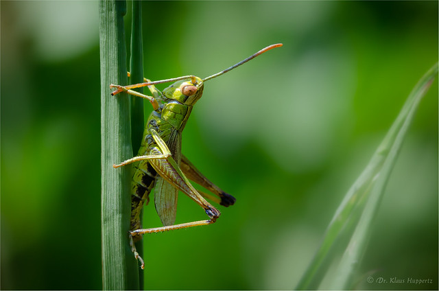 grooming antennae