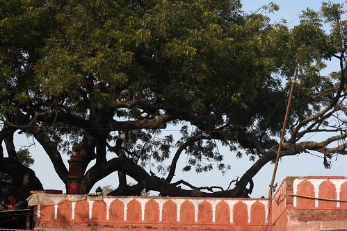 City Faith - Sufi's Tree, Old Delhi