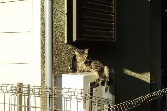 Today's Cat@2019-08-26