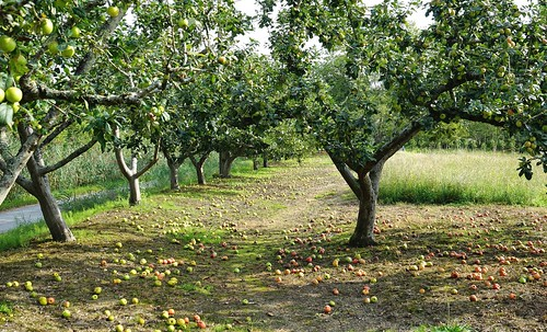 Ya llegaron!! ya están aquí las manzanas