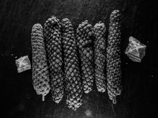 Piper longum & fleur de sel