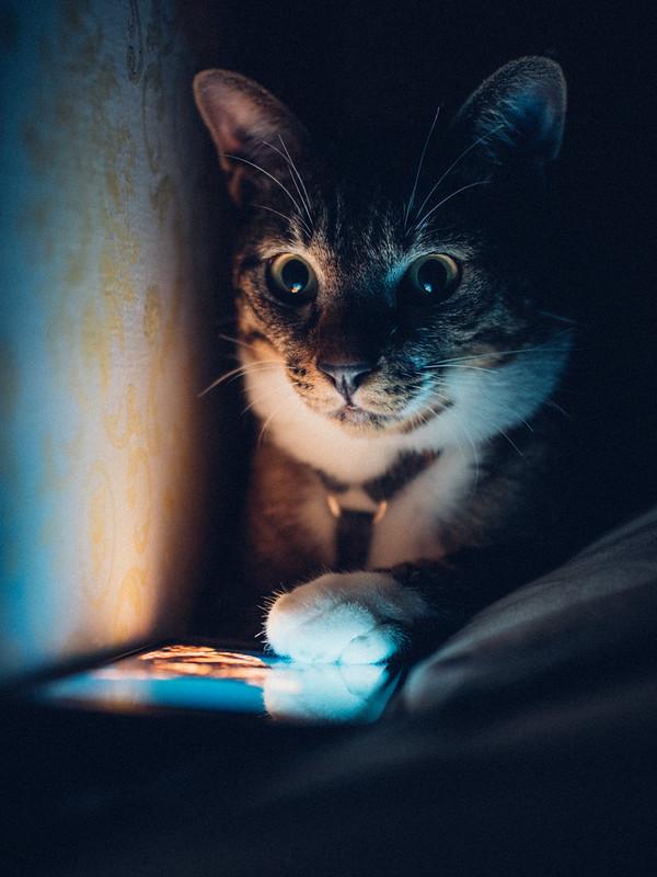 小隻仔半夜偷玩手機|Cat