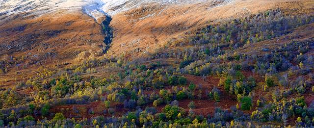 Loch Leven Autumn Treescape º»