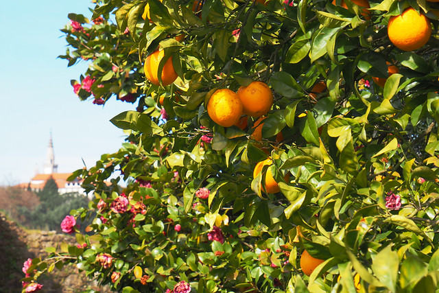 Oranges, Portugal