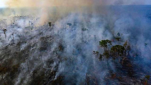 Fuegos en el Amazonas