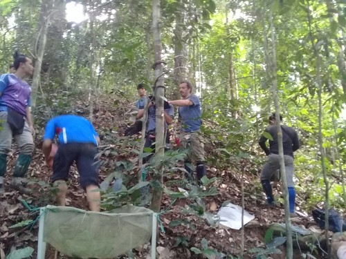 Mon, 08/26/2019 - 15:02 - The field crew at work in Danum Valley.
