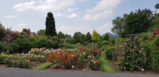Sangerhausen | Europa-Rosarium