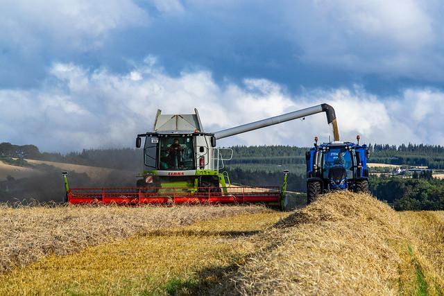 Cutting Barley near Buckie
