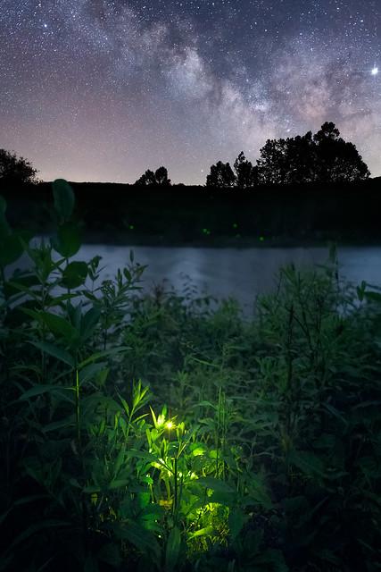 Tionesta fireflies 2019 Jason Gambone-372