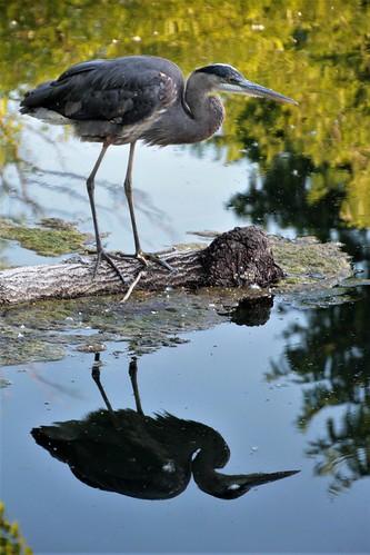 Reflection....