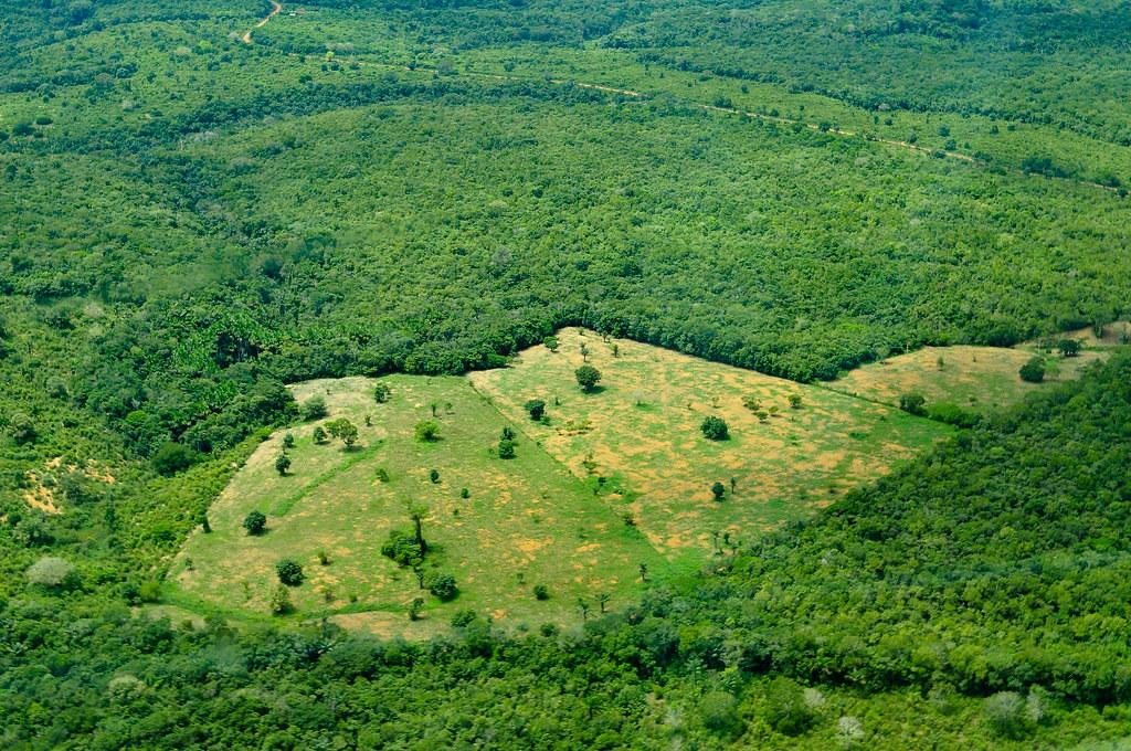 巴西亞馬遜雨林空照圖。Neil Palmer/CIAT(CC BY-NC-ND 2.0)