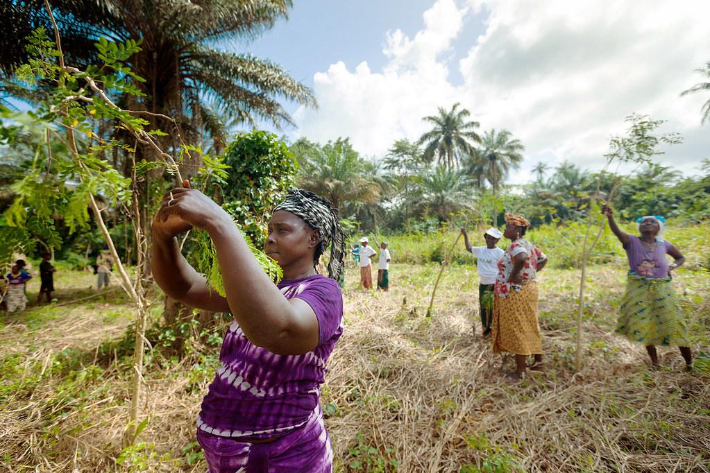幾內亞農村的勞動女性。來源:聯合國婦女計畫,Joe Saade攝(CC BY-NC-ND 2.0)
