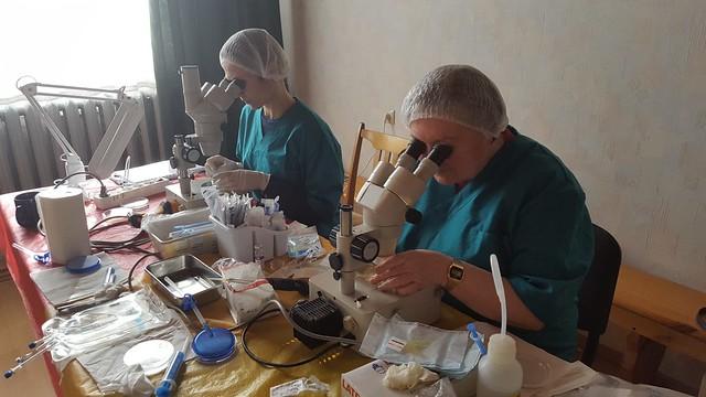 embriju kvalitātes noteikšana z.s Zvaigznītes