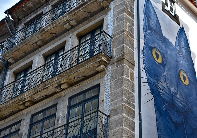 Staring cat in Porto