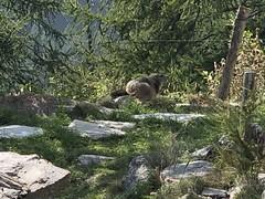 Marmotta!