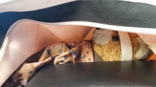 Bag Bear